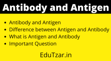 प्रतिजन और प्रतिरक्षी | Antigen and Antibody in Hindi | Difference between Antigen and Antibody
