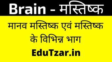 Brain in Hindi – मानव मस्तिष्क | mstsc | Parts of Brain in Hindi | मस्तिष्क के भाग