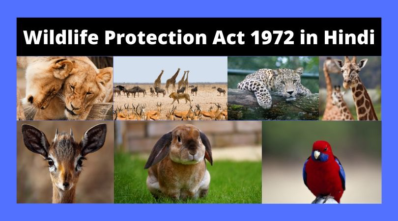 wildlife protection act 1972 in hindi
