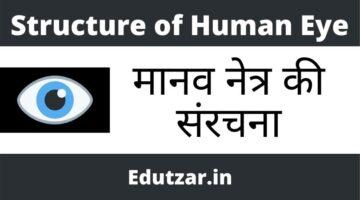 मानव नेत्र की संरचना – Structure of Human Eye in Hindi