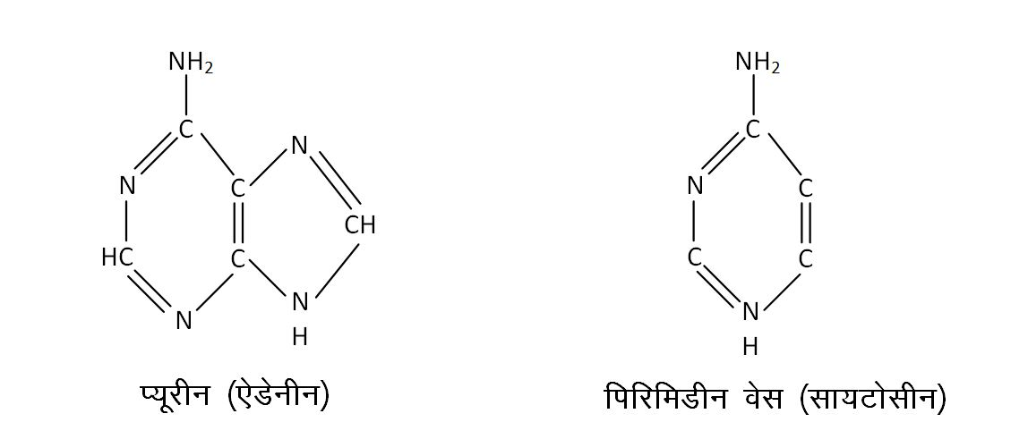 structure of nitrogenous base