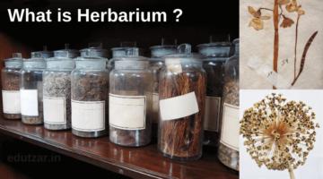 पादप संग्रहालय क्या है – What is Herbarium in Hindi | भारत और विश्व के प्रमुख पादप संग्रहालय | Class 11th & 12th Notes
