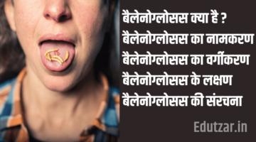 बैलेनोग्लोसस : नामकरण, वर्गीकरण, लक्षण, संरचना – Balanoglossus in Hindi
