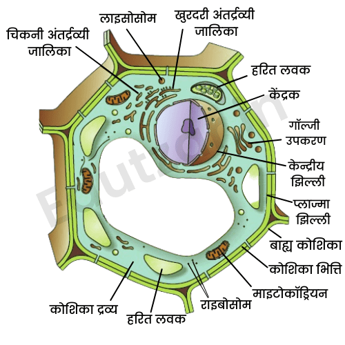 Cell Structure in Hindi