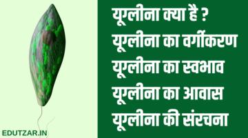 यूग्लीना क्या है : संरचना, वर्गीकरण, आवास और स्वभाव – Euglena in Hindi